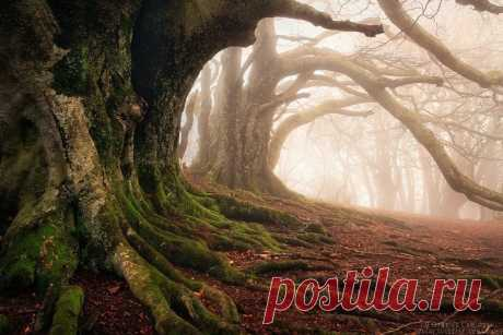 Красота дикого французского леса в фотографиях Florent Courty - Путешествуем вместе