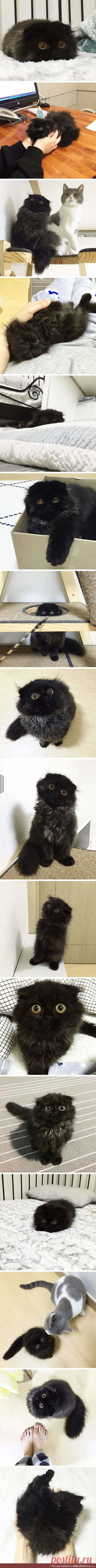This cat have special eyes! - FunSubstance Click to see the full post now