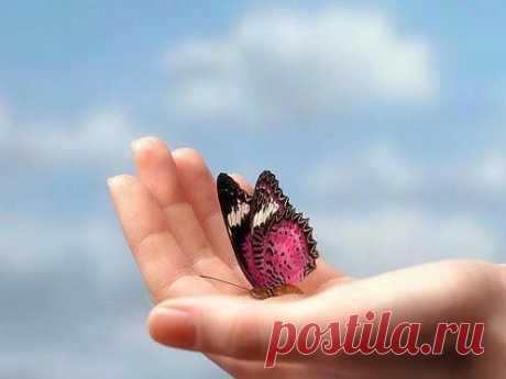 Бабочка на ладони