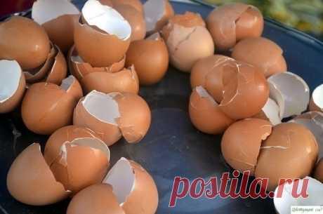 Как и в каком виде можно использовать яичную скорлупу на даче? 3 полезных совета