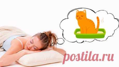К чему снится Кошачье Говно — 45 значений сна для мужчин и женщин