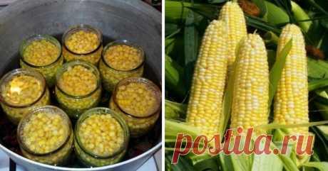 Консервация кукурузы на зиму. Вкуснее магазинной! Консервированная кукуруза в домашних условиях – это отличная заготовка для салатов и прочих блюд. Продукты: — кукуруза молодая, любое количество. Для приготовления маринада в расчете на 4 полулитровые