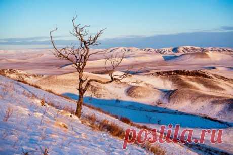 Одинокое дерево, выросшее в суровых условиях Сагайской степи, Республика Хакасия. Снимал Максим Ахпашев: nat-geo.ru/community/user/17532/