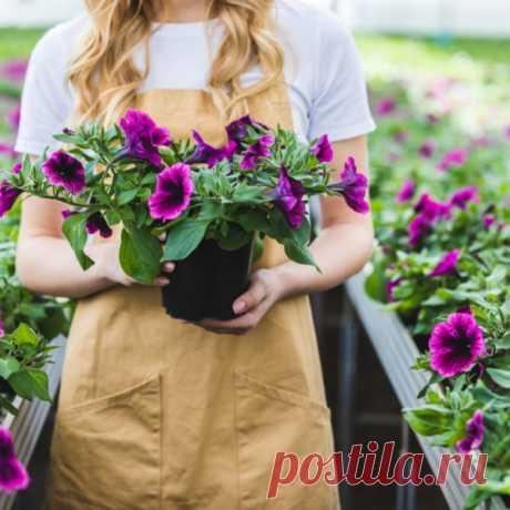 Так петунию еще никто не сажал, рассада всходит моментально Цветы - первое, что хочется видеть в летний сезон: яркая палитра, свежая зелень. Петунии возглавляют список привлекательных растений. Как посеять петунии? Наш способ поможет не только получить рассаду, но и вырастить здоровые цветы.