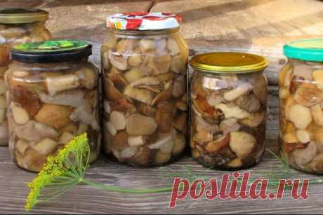 Как мариновать грибы на зиму в банках: рецепты приготовления маринованных грибов в домашних условиях