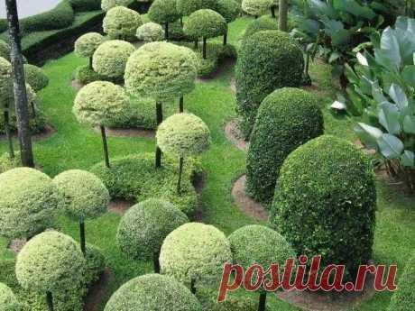 Шаблоны для стрижки деревьев и кустарников