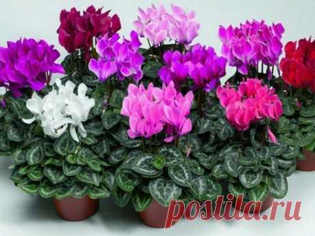 СЕКРЕТЫ РАССАДКИ ОРХИДЕЙ: КАК 1 РАСТЕНИЕ ПРЕВРАТИТЬ В 100! Орхидея — это любимый цветок многих цветоводов. Он считается очень требовательным. Однако многие орхидеи хорошо растут в доме и без особого ухода. Если ты хочешь, чтобы твое жилище превратилось в целую оранжерею с цветами, не нужно сильно тратиться. Мы подскажем тебе, как превратить 1 цветок в 100. Те, кто уже опробовали этот метод, не могут налюбоваться красотой орхидей в своем доме. Как улучшить рост корней? Купи мох сфагнум, который…