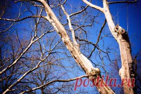 Что посадить на месте высохшего дерева