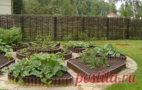 """КАК ОДНО РАСТЕНИЕ ГОТОВИТ УДОБРЕНИЕ ДЛЯ ДРУГОГО    У каждого растения свое """"меню"""". Меняйте растения местами, и вам не нужно будет дополнительно удобрять почву, ведь она не будет истощаться. Существует общее правило: культура возвращается на свое ме…"""