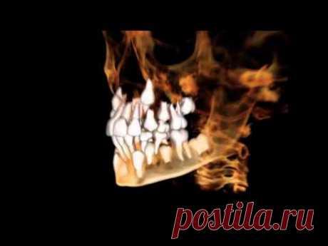 Практика регенерации новых, молодых зубов