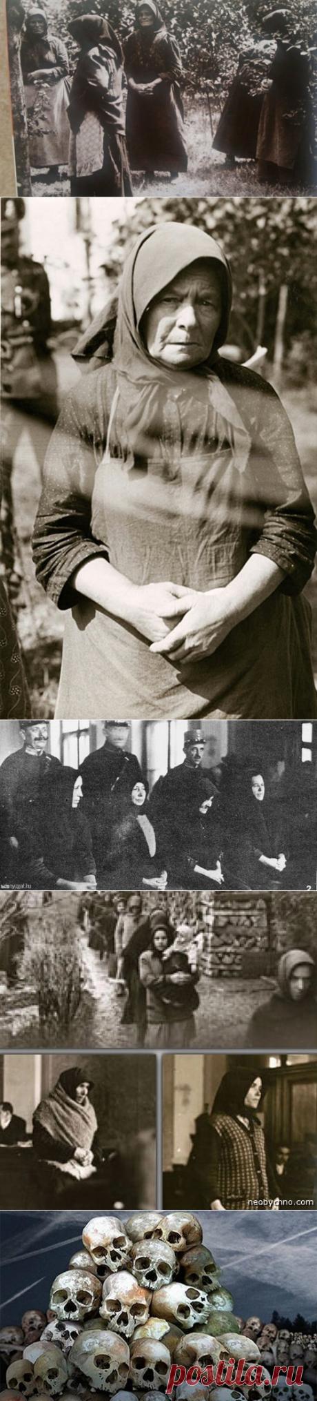 Черные вдовы: деревня женщин-маньячек | Умный волчара | Яндекс Дзен