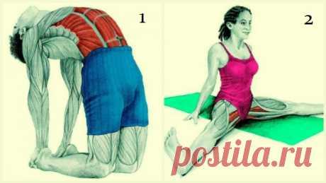 20 упражнений для гибкости всего тела: это лучшее, что можно сделать для роста и укрепления мышц!