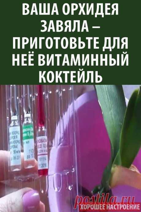 Ваша орхидея завяла – приготовьте для неё витаминный коктейль