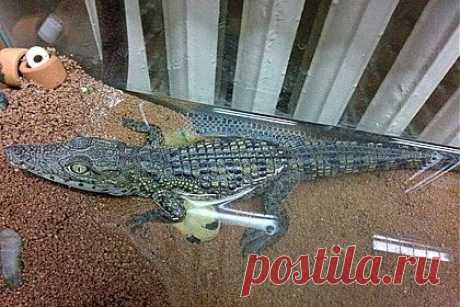 В Петербурге на помойке нашли крокодила