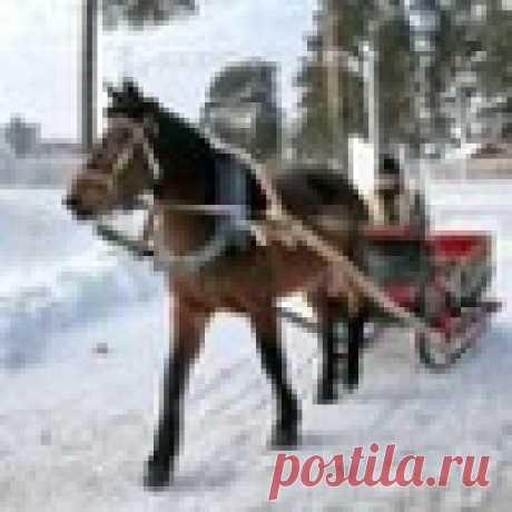 zelianko141@mail.ru