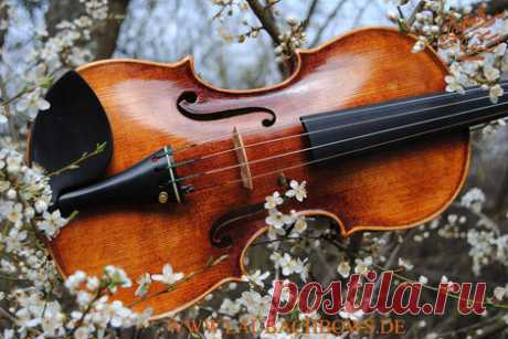 The sound of the violin and the right choice - Laubach violin workshop