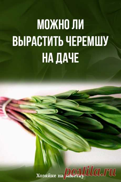 Whether it is possible to grow up a ramson at the dacha