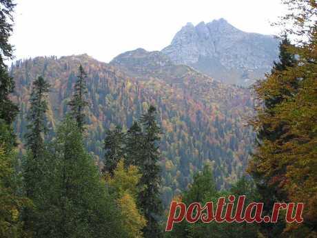 Осень  в горах Абхазии