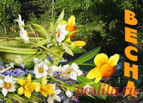 Картинка Сегодня в мир пришла весна
