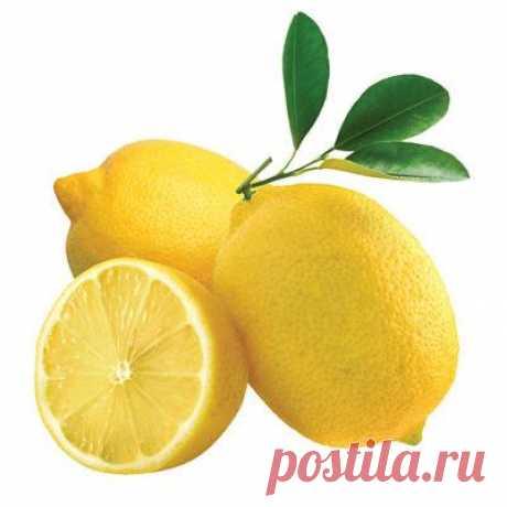 Имбирь, лимон, мед, чеснок для чистки сосудов: польза и вред каждого ингредиента, рекомендации к применению и противопоказания, пошаговые рецепты с пропорциями Русский фермер