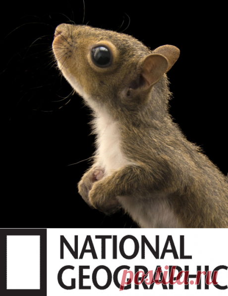 Squirrels | National Geographic