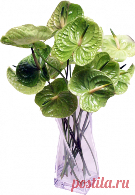 Цветы в крзинках, вазах
