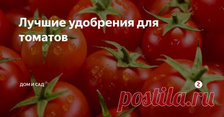 Лучшие удобрения для томатов