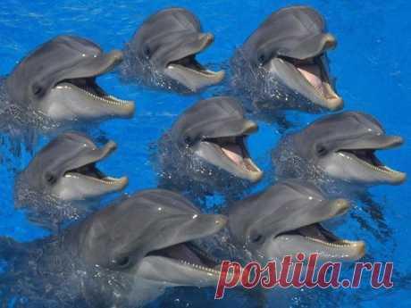 """Индия признала дельфинов личностями и запретила дельфинарии Правительство Индии присвоило дельфинам статус """"личностей, не относящихся к человеческому роду"""". Таким образом Индия стала первой страной, признавшей уникальный интеллект и самоосмысление представителей отряда водных млекопитающих — китообразных. Решение было озвучено главой Министерства окружающей среды и лесного хозяйства Индии, запретившего также выступления с использованием дельфинов, находящихся в неволе — в…"""