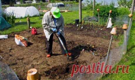 Какие удобрения вносить осенью – виды и дозировка | Удобрения и стимуляторы (Огород.ru)