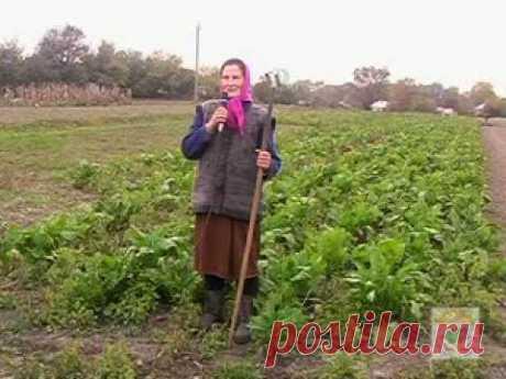 """""""ПрофСапка"""" новый инструмент для ручной обработки почвы"""