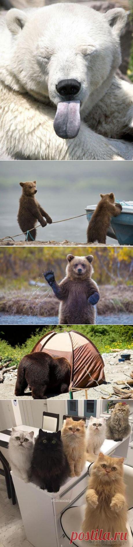 Смешные медведи, которые ведут себя как люди