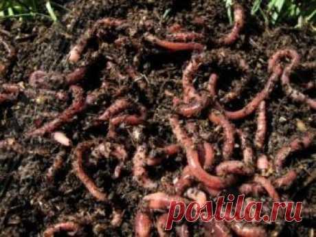 Разведение червей в домашних условиях для рыбалки | KARPPOKLEVKIN.RU | Яндекс Дзен