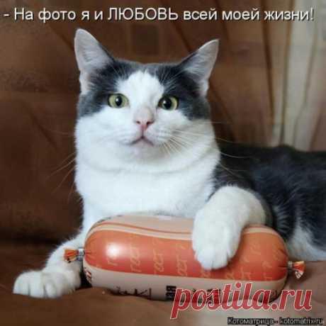 Новая котоматрица для настроения (30 фото) Еженедельная коллекция самых свежих и самых прикольных котоматриц от популярного сайта!  Всем улыбок и замечательных выходных!