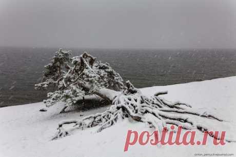 Суровая и прекрасная алтайская зима / Туристический спутник