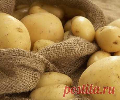 5 секретов, почему сырой картофель полезен для кожи Возможно, что вам никогда не приходило в голову использовать сырой картофель для ухода за кожей. На самом же деле, это настоящая находка, которой не стоит пренебрегать.
