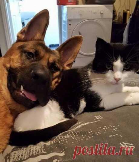 Селфи с лучшим другом