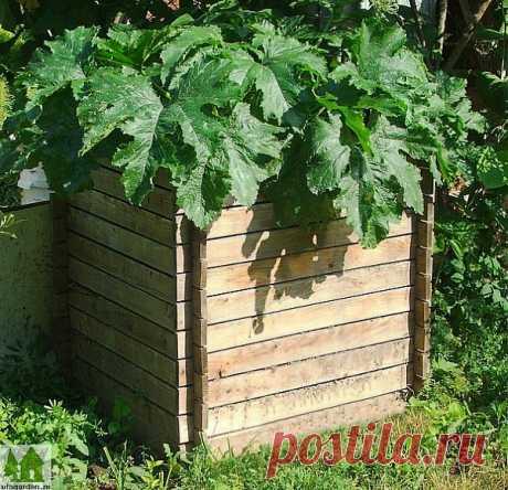 Выращивание кабачков | Дачная жизнь - сад, огород, дача