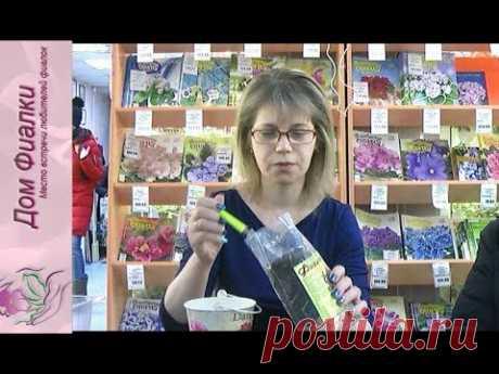 ДФ.Выращивание глоксиний и минисиннингий