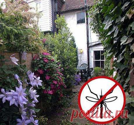 Как спастись от комаров народными средствами?.