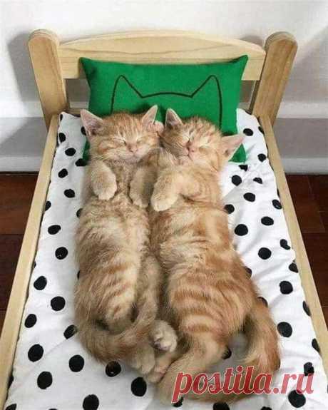 Фото-доказательства того, что коты могут спать там где им положено