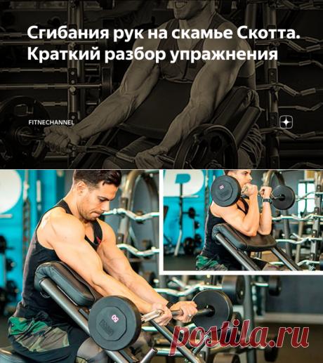 Сгибания рук на скамье Скотта. Краткий разбор упражнения | fitnechannel | Яндекс Дзен