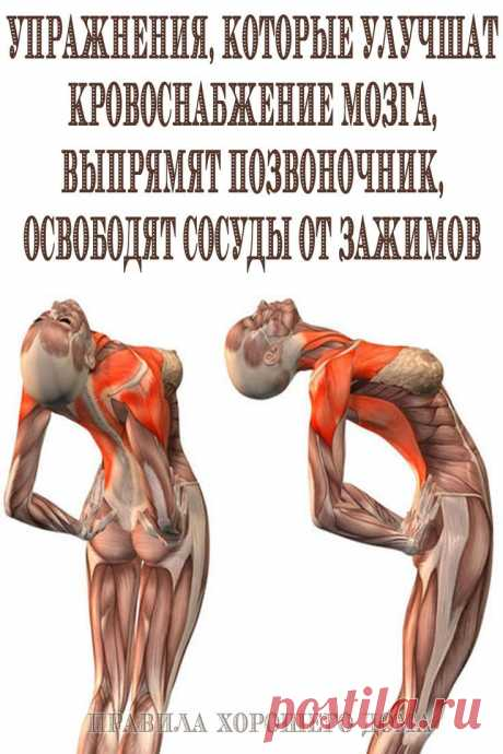 Упражнения для улучшения кровоснабжения мозга и работы сосудов