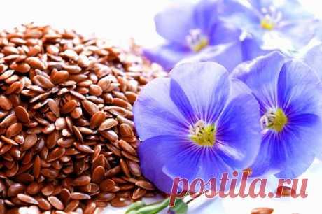 Льняное семя - польза, как принимать, противопоказания