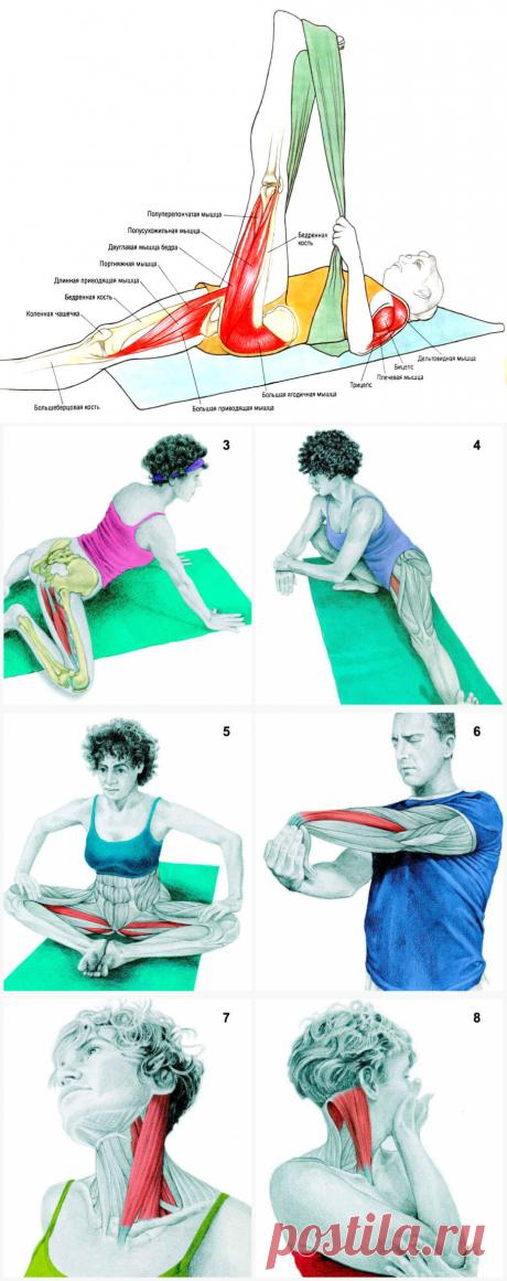 (+2) Что Вы тянете на самом деле: растяжка мышц в картинках