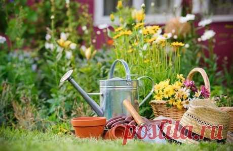 Сад своими руками: 30 полезных лайфхаков для дачников.   Красивый Дом и Сад