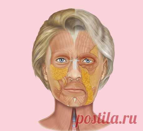 Как «поставить на место» лицо: Простое упражнение для противодействия возрастным изменениям В медицинской науке физиологическую основу старения организма связывают с высыханием всего организма – тканей, костей, сосудов… и в том числе и костей черепа. Этим принципом абсолютно несправедливо пренебрегает косметологическая наука, когда объясняет нам причины старения лица. Поэтому в даннойстатье мы восполним этот пробел в косметологии и рассмотрим механизм старения нашего лица...