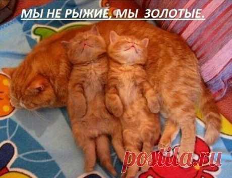 золотки мамины