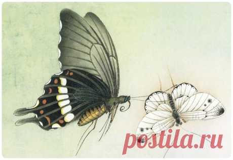 Китайские бабочки. Видео-Урок + Галерея.