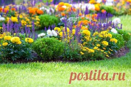 Как организовать клумбу непрерывного цветения