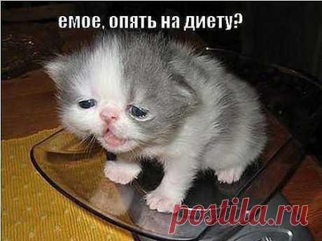 Начни твою программу похудения прямо сейчас! Пятница  в 18-00ч. По мск....можно будет узнать:КАК  дойти до СТРОЙНОСТИ,без вреда для здоровья !!! ЛЕТО - и ВЫ КОРОЛЕВА ПЛЯЖА!!!  Вход: https://8.ak-pitaniya.com/